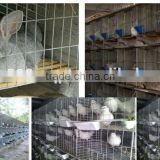 best price high quality wholesale rabbit hutches cage