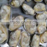 Japanese food supplier frozen delicious fresh whole boiled clam for sale