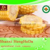 high quality yellow corn for animal feed. maize. canned corn