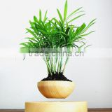 top hot levitation potted plant pots floating air bonsai