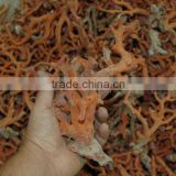 RED ROUGH CORAL BRANCHES XXL