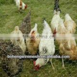 HEXAGIANL WIRE NET POULTRY CAGES