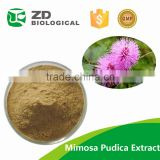 mimosa hostilis root bark,mimosa hostilis root bark extract,mimosa hostilis root bark powder