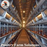 H type layer chicken chicken cage with full automatic equipment