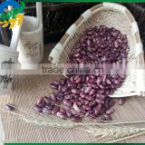 2015 Purple Speckled Kidney Beans