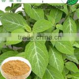 100% Natural Kava extract powder 30%kavalactones