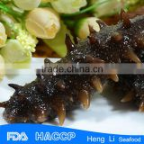 HL011 Hot sale Nutritious the best sea cucumber export