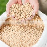 Natural Non-GMO Soybean Extract with Soy Isoflavones
