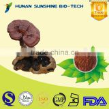 Well-being and low pesticide Reishi Mushroom Polysaccarides 20% ganoderma lucidum extract powder