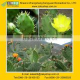 100% Natural Plant Extract Cactus P.E. 5:1, 10:1, 20:1, 30:1, 50:1, Opuntia dillenii Haw
