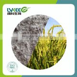China manufacture Lvkee supply 100 bilion cfu/g Bacillus amyloliquefaciens for agriculture