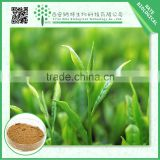 Pure Natural Camellia sinensis extract Polyphenol 95%,Camellia sinensis Polyphenol, Catechin powder EGCG powder