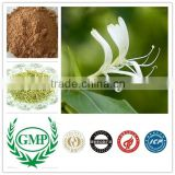 Organic Chinese honeysuckle flower bud extract chlorogenic acid