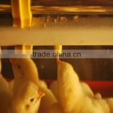 poultry Farm Equipment Feeding and Drinking System for Brioler Livestock Farm Watering System