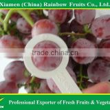 Nasik grapes from Yunnan & Xinjiang area Red globe grape fresh fruit Red grape from China import export companies pune