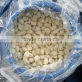 2015 Pickled Garlic Cloves In Brine 250-350 garlic in brine White garlic pure white garlic