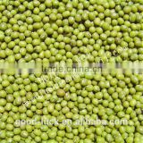 China heilongjiang green mung beans ( food grade)                                                                         Quality Choice