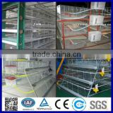 Automatic A type chicken layer cage