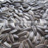 crop top black sunflower seed for oil for sale