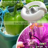 red/blue emittiing color magnetic induction 600w led grow light
