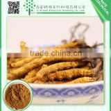 Gold Supplier Top Grade Ophiocordyceps Sinensis Extract Cordyceps Polysaccharides Powder