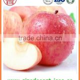 Fruit best choice fresh new sweet red fuji apple in Grade A/B/C from yantai in good quality