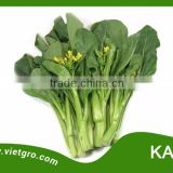 High Yield OP Chinese Kale Seed - Kale