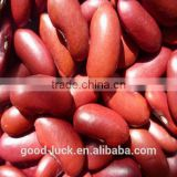 Chinese red kidney bean 2015