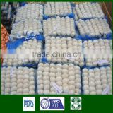 High Quality 2015 Fresh Garlic Zhongmou Zhongmu White Garlic 4.5CM 5.0CM 5.5CM 6.0CM 6.5CM