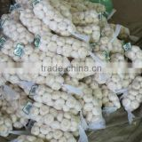 INquiry about Chinese jinxiang 1kg pure white and normal white garlic
