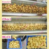 practial & affortable 3T/H brush model stainless steel potato peeling and washing machine