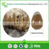 factory supply cistanche extract powder