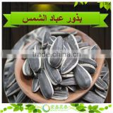 2014 New Crop/ American Inner Mongolia Black Sunflower Seeds 5009 Type/High Quality/24/68 American Sunflower Seeds
