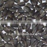 black oil sunflower seed prices