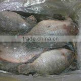 frozen fish whole round gutted scaled tilapia wholesale price