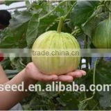 Shuangxing No.1 Chinese Pear-shape Hybrid Musk Melon Seeds