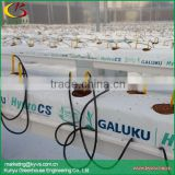 Gutter growing system for greenhouse production hydroponic substrate trough for strawberry