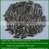 2015 Chinese Sunflower Seeds For Snack