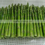 IQF asparagus cuts frozen asparagus with BRC certificate