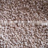 bulk peanuts for sale