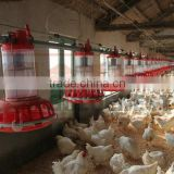 Goldenest supply automatic poultry feeder for breeder house equipment feeding sytem good price