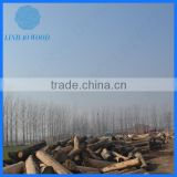 Natural Cheap Price Solid Wood Logs