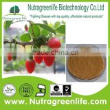 Factory supply 100% Natural Wolfberry Standardized Extract Goji berry extract