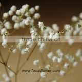Hobby Lobby Wholesale Flowers Babysbreath Flower For Mother's Day Fresh Cut Flowers Gypsophila