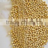Yellow Split Peas