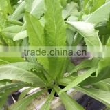 PVC Hydroponic Channels for lettuce 75mmx50mm