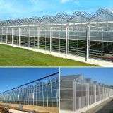 Glass Surrounded Greenhouse with PC Sheet Triple A-Shape Roof