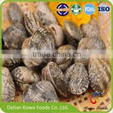 Frozen Wild Caught Cooked Short Necked Clam in Vacuum Pack