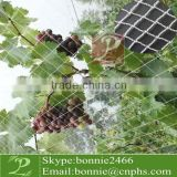 vineyard bird netting for protect grape