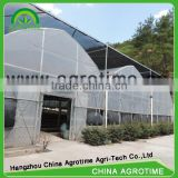 Asia style multi span poly green house for tomatoes/strawberries